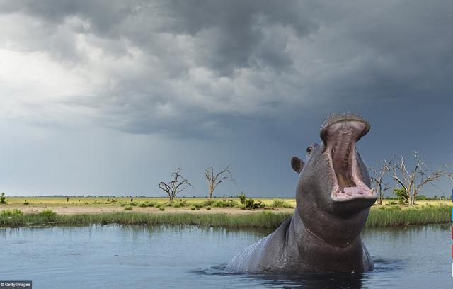 Đồng bằng Okavango, Botswana