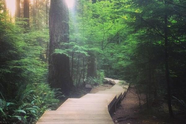 Công viên Lynn Canyon và cầu treo