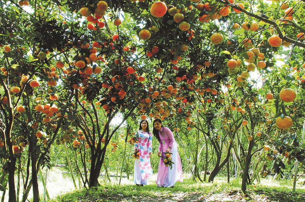 Thăm vườn cây trái Cồn Sơn