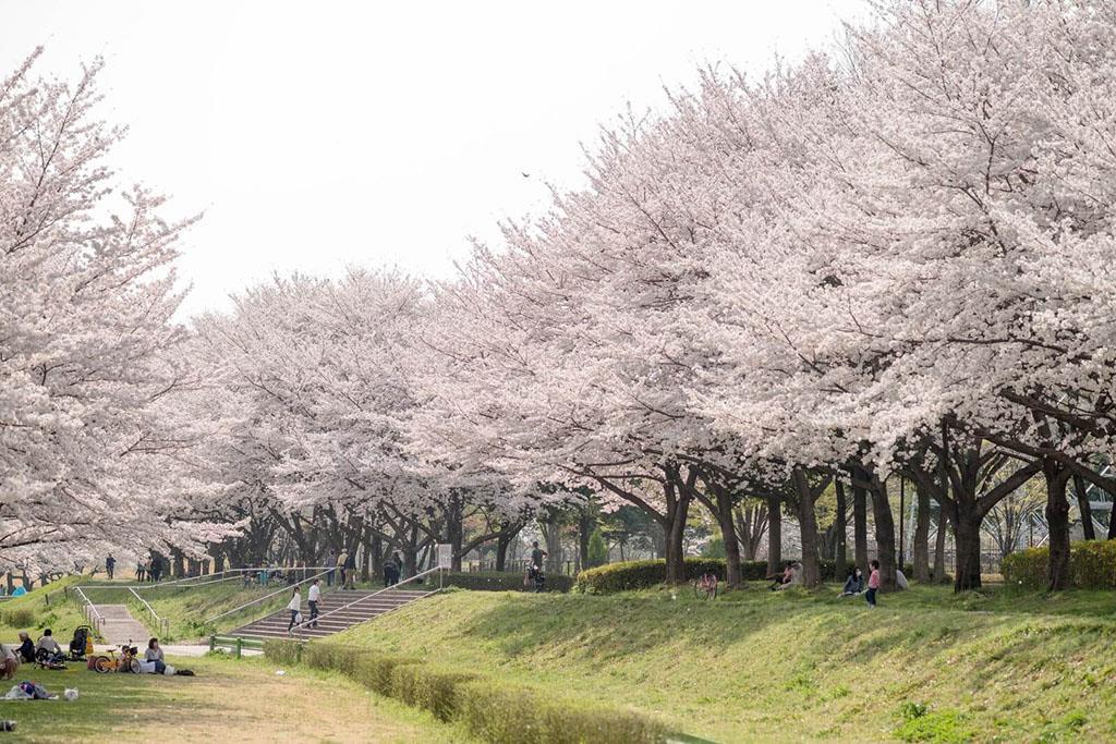 Công viên Asahiyama, Asahikawa