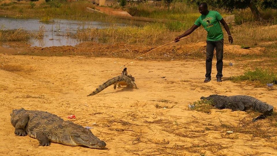Người dân Bazoule tôn thờ và bảo vệ cá sấu