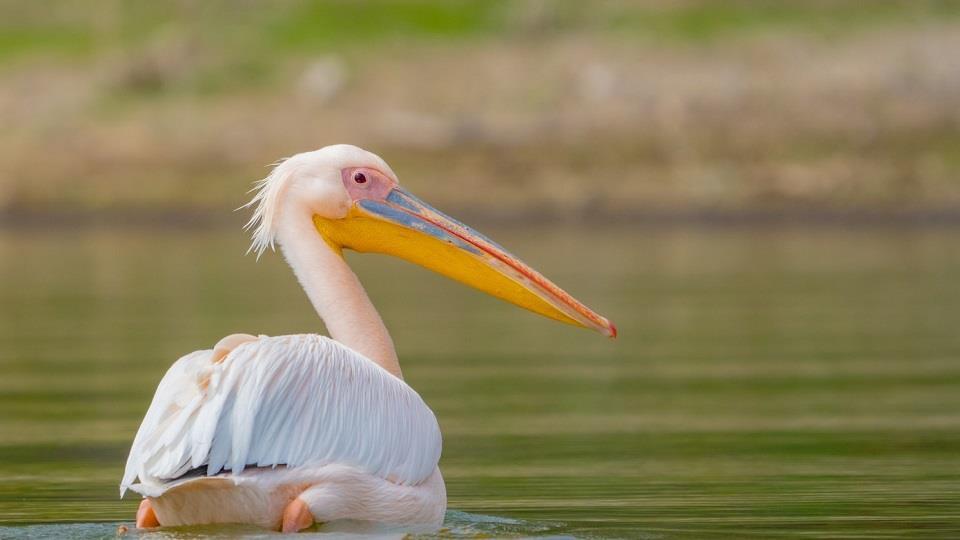 Hồ Naivasha