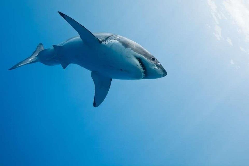 1. Bơi cùng cá mập trắng, Cape Town, Nam Phi