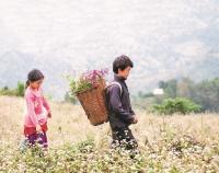 Tháng 4 lên Cao Bằng ngắm hoa tam giác mạch đẹp lịm tim