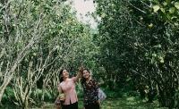 Hè về miền Tây tận hưởng trái cây ngọt lành tại vườn