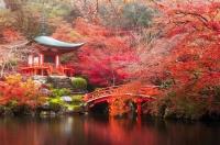 Du lịch Nhật Bản trải nghiệm hái táo, ngắm lá đỏ ở Aomori